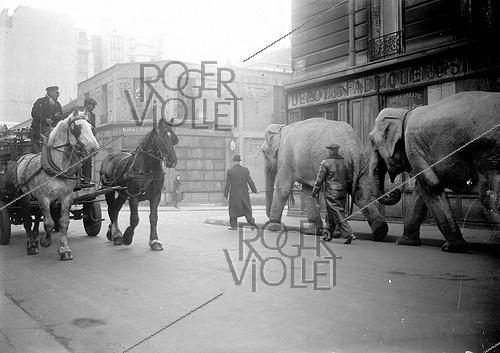 Roger-Viollet | 651666 | Elephant procession in the streets of Paris. March, 1941. | © LAPI / Roger-Viollet