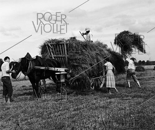 Roger-Viollet | 531953 | Family at haymaking time, 1958. Photograph by Janine Niepce (1921-2007). | © Janine Niepce / Roger-Viollet
