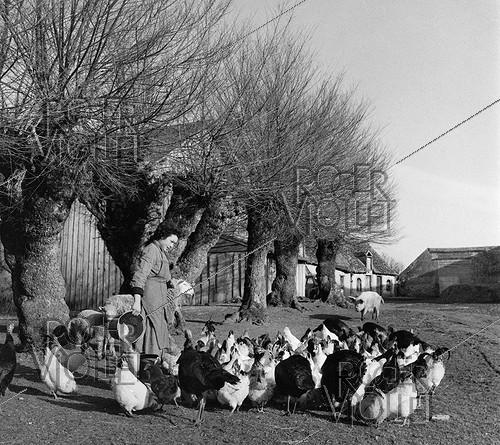 Roger-Viollet | 635484 | Farmer and her farmyard animals, 1956. Photograph by Janine Niepce (1921-2007). | © Janine Niepce / Roger-Viollet