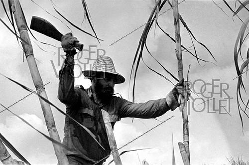 Roger-Viollet | 363080 | Fidel Castro (1926-2016), Cuban revolutionary and statesman, cutting the sugar cane. Cuba, 1970. | © Gilberto Ante / Roger-Viollet