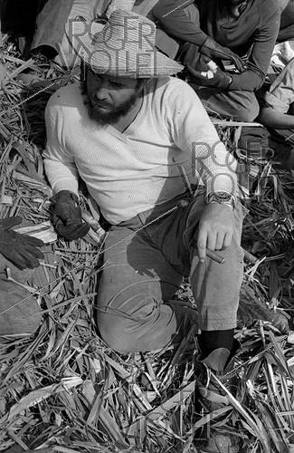Roger-Viollet | 527775 | Fidel Castro (1926-2016), Cuban revolutionary and statesman, cutting the sugar cane and talking with some farmers. Cuba, 1970. | © Gilberto Ante / Roger-Viollet