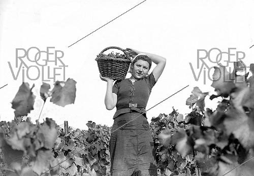 Roger-Viollet | 789951 | Grape harvest in the Champagne region (Möet et Chandon). France, 1941. | © LAPI / Roger-Viollet