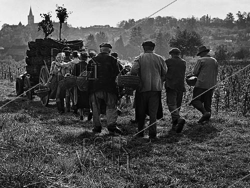 Roger-Viollet | 1010596 | Grape-pickers going back. Rully (Saône-et-Loire). Photograph by Janine Niepce (1921-2007). | © Janine Niepce / Roger-Viollet