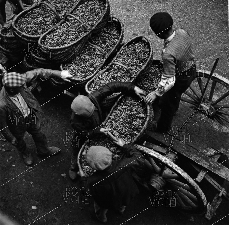 Roger-Viollet | 601429 | Grape-pickers unloading baskets at the grower's. Photograph by Janine Niepce (1921-2007). | © Janine Niepce / Roger-Viollet