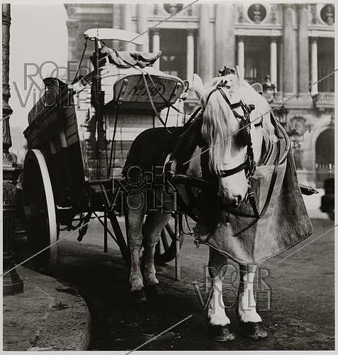 Roger-Viollet | 702669 | Ice-cream maker at the Opéra National de Paris, Palais Garnier, horse, Paris (IXth arrondissement). 1934. Photograph by Roger Schall (1904-1995). Paris, musée Carnavalet. | © Roger Schall / Musée Carnavalet / Roger-Viollet