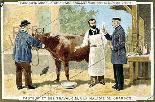 Roger-Viollet | 946053 | Louis Pasteur (1822-1895), French biologist and his works on the anthrax. Advertising illustration for the chocolate of Aiguebelle. | © Roger-Viollet / Roger-Viollet