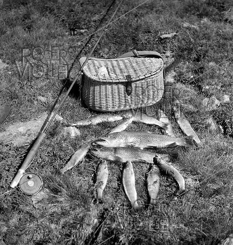 Roger-Viollet | 879271 | Picture(table) of peach(fishing): trouts Fario and reel Silentreel ( Pezon-et-Michel), by 1950. | © Tony Burnand / Roger-Viollet