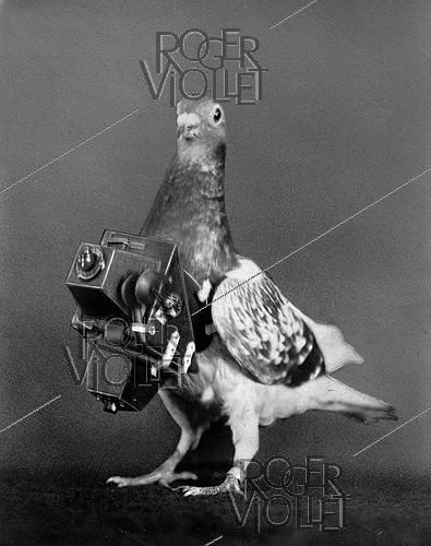 Roger-Viollet | 1039570 | Pigeon photographer with its camera. France, around 1910. | © Jacques Boyer / Roger-Viollet