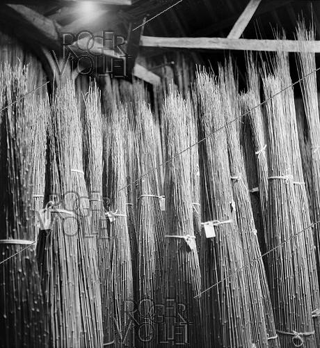 Roger-Viollet | 822610 | Stock of bamboos at the Etablissements Pezon et Michel, manufacture for fishing rods. Amboise (Indre-et-Loire), circa 1945. | © Tony Burnand / Roger-Viollet