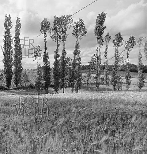 Roger-Viollet | 1023481 | Trees and fields. Charente (France), 1950's. Photograph by Janine Niepce (1921-2007). | © Janine Niepce / Roger-Viollet