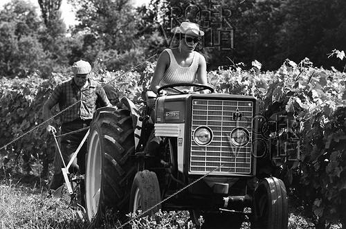 Roger-Viollet | 278506 | Wine grower driving her tractor. Charente (Poitou-Charentes), 1967. Photograph by Janine Niepce (1921-2007). | © Janine Niepce / Roger-Viollet