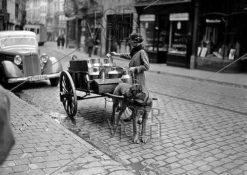 Roger-Viollet | 469704 | World War II. Dog dragging a cart full of milk cans. Paris, 1941. | © LAPI / Roger-Viollet
