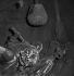 Guerre 1939-1945. Occupation. Destruction de statues pour récupérer les métaux. Le monument à Claude Chappe (1763-1805), ingénieur français, inventeur de la télégraphie aérienne, par Emile Louis Macé. Paris, 1941. © Pierre Jahan / Roger-Viollet