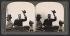 Theodore Roosevelt (1858-1919), homme d'Etat américain, et son épouse Edith Roosevelt (1861-1948), lors l'exposition internationale de Jamestown (Etats-Unis), 1907. Vue stéréoscopique. © The Image Works / Roger-Viollet
