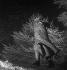 La statue de Georges Clemenceau (1841-1929), homme d'Etat français, sous la neige. Paris, hiver 1939-1940. © Gaston Paris / Roger-Viollet