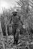 Fidel Castro (1926-2016), homme d'Etat et révolutionnaire cubain, coupant la canne à sucre. Cuba, vers 1960. © Gilberto Ante / Roger-Viollet
