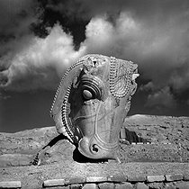 Head of a bull from a capital of the palace of Darius I the Great (522-486 BC). Persepolis (Iran), January 1958. © Roger-Viollet