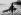 Transport d'un sapin de noël, vers 1900-1910. © Roger-Viollet