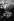 Monde paysan. Bergerie. Corrèze (France), 1965-1967. Photographie de Jean Marquis (né en 1926). © Jean Marquis/Roger-Viollet