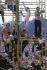 Participants au festival de Woodstock. Bethel (Etats-Unis), août 1969.  © Tom Miner/The Image Works/Roger-Viollet