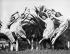 Groupe de danseuses aux Etats-Unis.  © Underwood Archives/The Image Works/Roger-Viollet