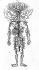 La circulation sanguine. Planche d'anatomie. Encyclopédie de Diderot, planches tome I, 1762. © Roger-Viollet