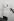 Mouettes au-dessus de la Tamise. Tower Bridge. Londres (Angleterre), 1958. © Jean Mounicq/Roger-Viollet