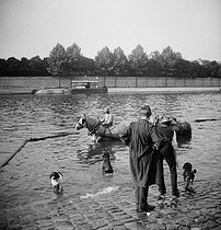 Swimming with dogs and horses. Paris, around 1890. Detail of a stereoscopic view. © Léon et Lévy/Roger-Viollet