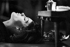Romy Schneider (1938-1982), actrice autrichienne. © Jack Nisberg / Roger-Viollet