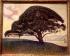 """Paul Signac (1863-1935). """"Le pin de Bonaventura à Saint-Tropez"""", 1893. Musée de Houston (Etats-Unis). © Roger-Viollet"""