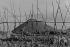 Le long de La Deûle. Jardin potager. Lille (Nord-Pas-de-Calais), 1953. Photographie de Jean Marquis (né en 1926). © Jean Marquis/Roger-Viollet
