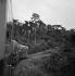 Le chemin de fer à voie unique Abidjan-Niger, qui roule deux fois par semaine dans la forêt vierge, puis dans les steppes, d'Abidjan à Ouaga-Dougou.1963. © Hélène Roger-Viollet / Roger-Viollet