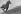 """""""La vie d'un cheval de courses"""", livre de Léon Zitrone (1914-1995). Le cheval Herbager au galop. 1961. Photographie de Jean Marquis (né en 1926). © Jean Marquis/Roger-Viollet"""