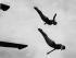 Olga Jorda et Leo Esser, plongeurs allemands, lors d'un entraînement dans la piscine de Highgate. Londres (Angleterre), vers 1935. © Imagno/Roger-Viollet