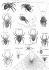 """Araignées. Gravure de Bénard. """"Encyclopédie"""" de Diderot (XVIIIème siècle). © Roger-Viollet"""