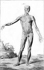 Anatomie. Encyclopédie de Diderot, planches tome I, 1762. © Roger-Viollet