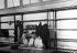Couple dans une salle d'attente du centre fédéral d'immigration d'Ellis Island. New Jersey (Etats-Unis), 1931. © Erich Salomon / Ullstein Bild / Roger-Viollet
