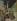 """Jacques Villon (Duchamp Gaston, dit, 1875-1963). """"Le buveur assis"""". Huile sur toile marouflée sur carton. 1930. Paris, musée d'Art moderne. © Julien Vidal / Musée d'Art Moderne / Roger-Viollet"""
