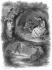 """Illustration pour """"Les Natchez"""" de François-René de Chateaubriand. Gravure de F. Delannoy d'après G. Staal. © Roger-Viollet"""