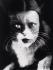 """Me + cat"". Deux photos en surimpression de Wanda Wulz et de son chat.  © Alinari/Roger-Viollet"