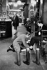Magasin du chausseur Lobb. Saint James Street. Londres (Angleterre), 1959. © Jean Mounicq/Roger-Viollet